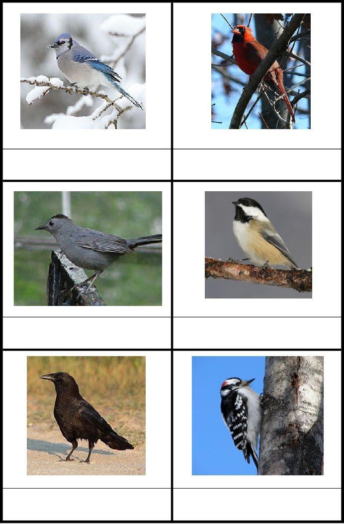 Bird Identification Cards: Blue Jay, Cardinal, Catbird, Chickadee, Crow, Downy Woodpecker, Goldfinch, Grackle, House Finch, Hummingbird, Junco, Nuthatch, Oriole, Robin, Wren, Mallard Duck, Chipping Sparrow, Red-winged Blackbird, Cowbird, Mourning Dove, Peregrin Falcon, Snowy Egret, Canada Goose, Bald Eagle, Goshawk