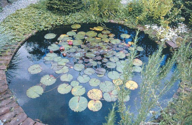 Siertuin kleine vijvers belevenissen van een tuinkabouter tuin ponds vijvers pinterest - Landschapstuin idee ...