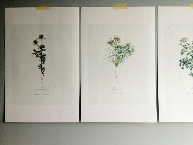 free vintage botanical printables - a daily something