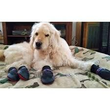 Buy Dog Boots That Stay On from PoochieBoots. Go for Fashionable Waterproof Dog Paw Covers. Visit our portal for Pet Booties on most competitive price.
