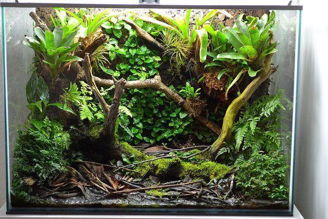 No tank but i like it www.ibrio.it your aquarium born here ! il tuo acquario nasce qui ! https://www.facebook.com/ibrio.it #ibrio #acquario #acquari #acquariologia #acquariofilia #aquarium #aquariums #piante #natura #pesci #zen #design #arredamento #layout #layouts #layoutdesign #roccia #roccie  #moss #freshwater #plantedtank #aquadesignamano #tropicalfish #fishofinstagram #aquaticplants #natureaquarium #nanotank #reefkeeper #nanoreef #saltwateraquarium