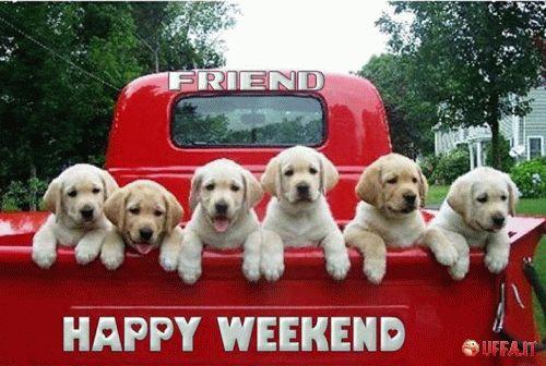#buonweekend #estate2015 #finesettimana #cani #cuccioli #checarini