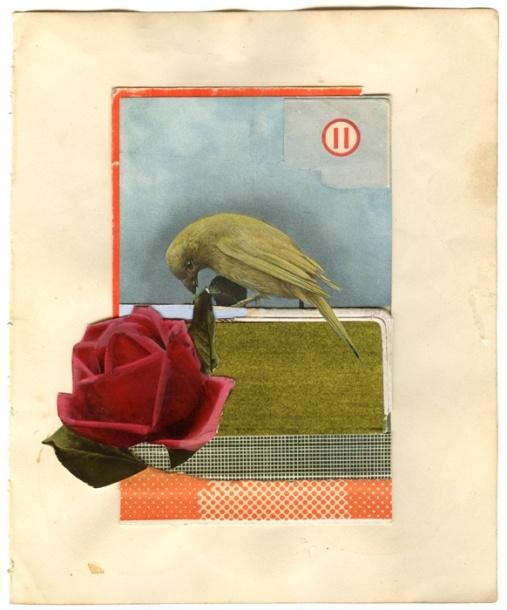 Rose - Bird.  Michelle Thompson