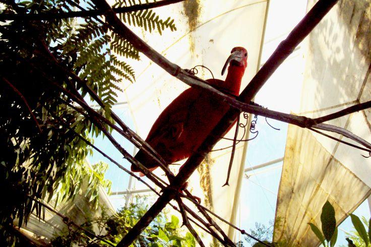 ibis rosso-biosfera Genova