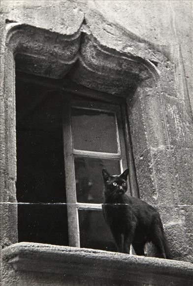 Black Cat Photo | Window Photography | Dark | Cats | Black and White | Witchy Familiar | Feline