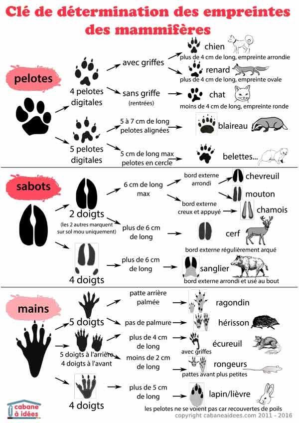 Comment reconnaître des empreintes d'animaux | La cabane à idées