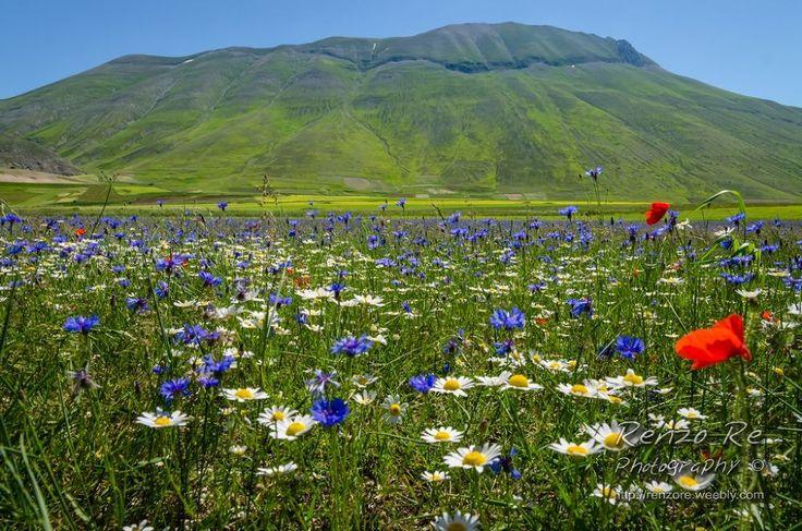 Castelluccio Flowers by Renzo Re
