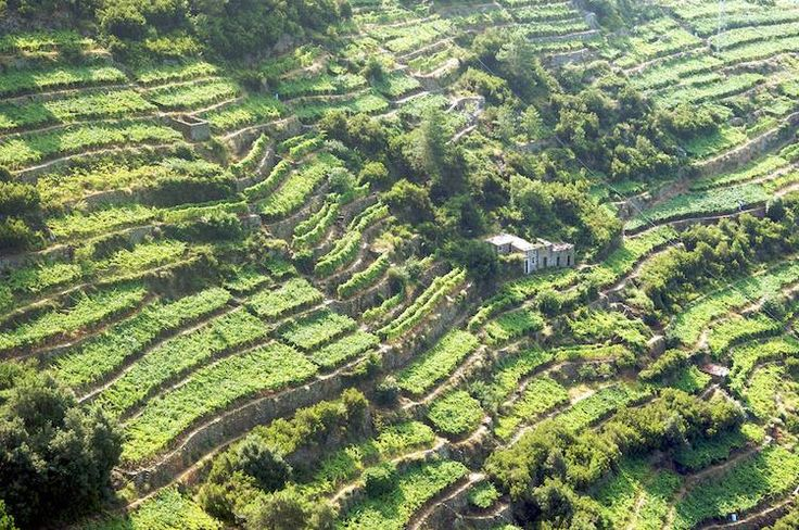 Terrazzamenti Liguria. Foto di Luca Volpi (CC BY-SA 2.0 https://creativecommons.org/licenses/by-sa/2.0/)Terraced Landscapes: Choosing the Future