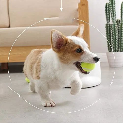 Advantage Is An Automatic Fetching Machine That Can Be Used By Dog And Owner Or Just The Dog The Launcher Features Make Independent Play Easy And Fun In 2020
