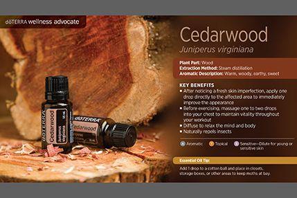 doTerra Power Point Image - Single Oil - Cedarwood