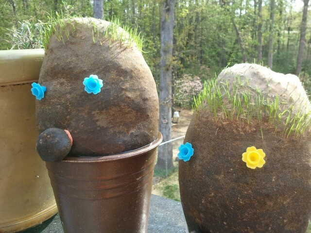 """These are HAIR HEADS. Made with pantyhose feet. Drop some grass seeds in the bottom (not to much). Used a cotton ball and a rubberband for the nose. Just pinch it up and wrap with rubberband. I put potting soil in next put extra. Use yur hands to shape in a ball , oblong or what ever shape """"face"""" you want. I tied the open (ankle) end in a knot to hold the soil in. I soaked it in tipid water till good and wet. Put them in planter and a cup with NO hole and keep it filled with water. I refill…"""