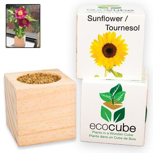 "Ecocube Sunflower - Grow beautiful flowers from this eco-friendly wood planter! Already filled with seed and fertilizer, so you just add water and sunshine. Plus, cube can be buried outdoors, giving your plant a permanent home. Starts growing in 6-8 days; starts blooming in 7-8 weeks. 3""Cube. (Product Number SM5473) $9.98 CAD"