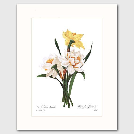Narcisse Art w/Mat (10e anniversaire mars cadeau d'anniversaire fleur, décoration murale chambre jaune) feutré botanique imprimer
