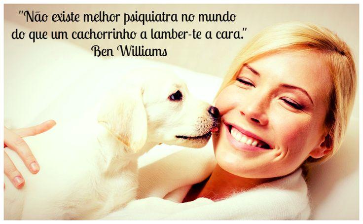 Frases Sobre Cães - O Dono Cuida