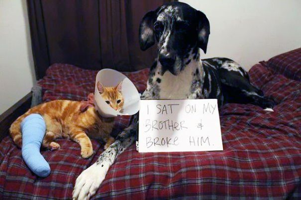 25 Guilty Dogs Who Are Being Shamed Publicly For Their Crimes! #10 Is So Wrong!