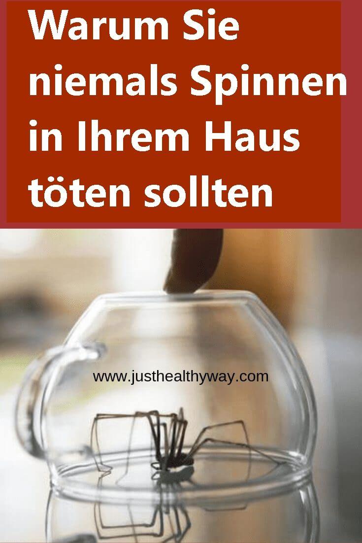 Warum Sie niemals Spinnen in Ihrem Haus töten sollten | njuskam!