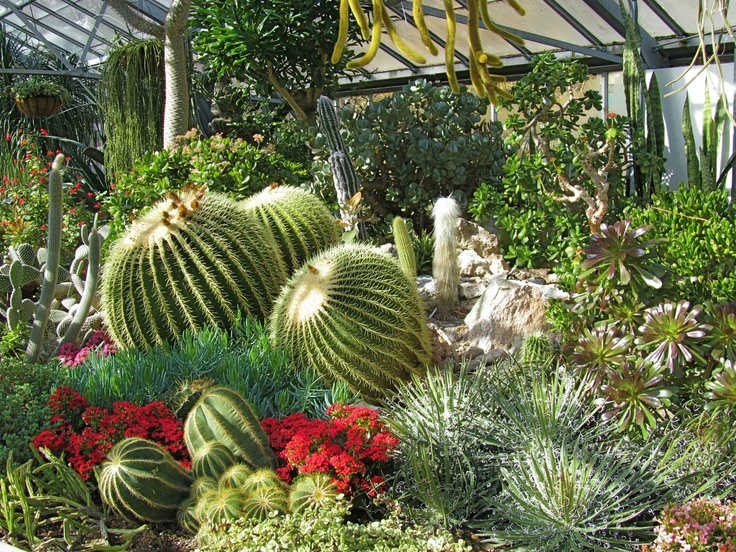 17 best images about desert plants on pinterest gardens for Hearty plants for outdoors