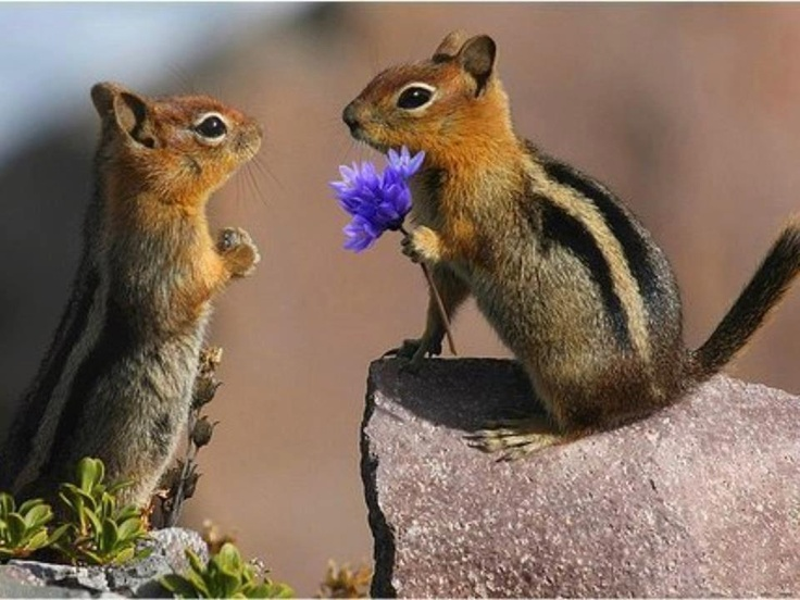 Valentine, will you be mine?  How cute and timely today!
