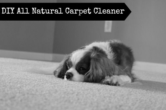 DIY Natural Carpet Cleaner Scented with Basil Safe for use around kids and dogs .