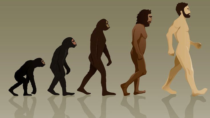 .Mujeres hermosas y hombres altos: Cómo evolucionará el ser humano en el futuro