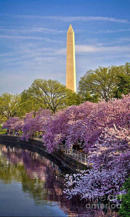 ✮ Washington Monument in Spring