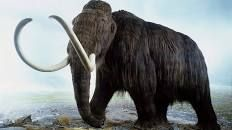 Scientists Say They Could Bring Back Woolly Mammoths Within Two Years - History in the Headlines