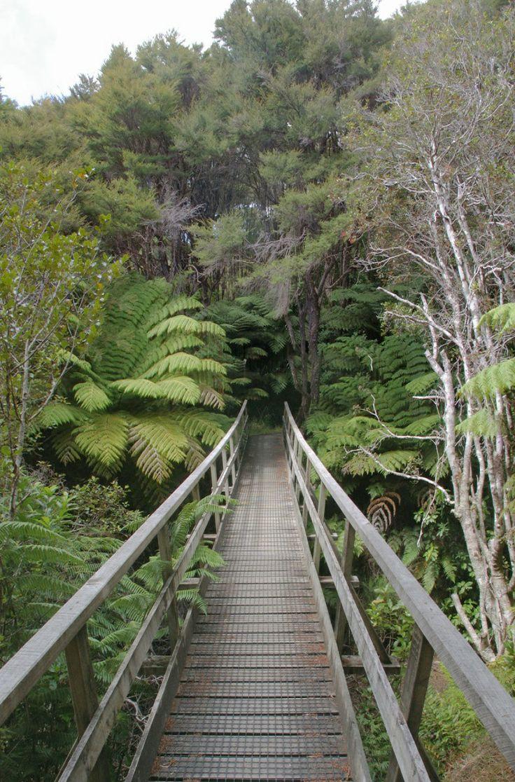 Nature surrounds the wooden bridge on the Abel Tasman Coastal Track, Abel Tasman National Park, Upper South Island, NZ