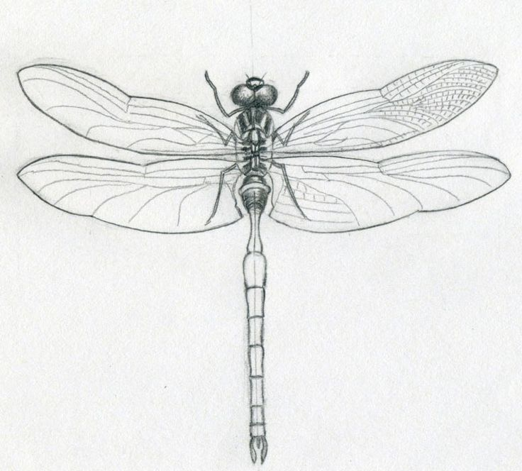 Dragonfly Tattoo Line Drawing : Best clean lines images on pinterest etchings