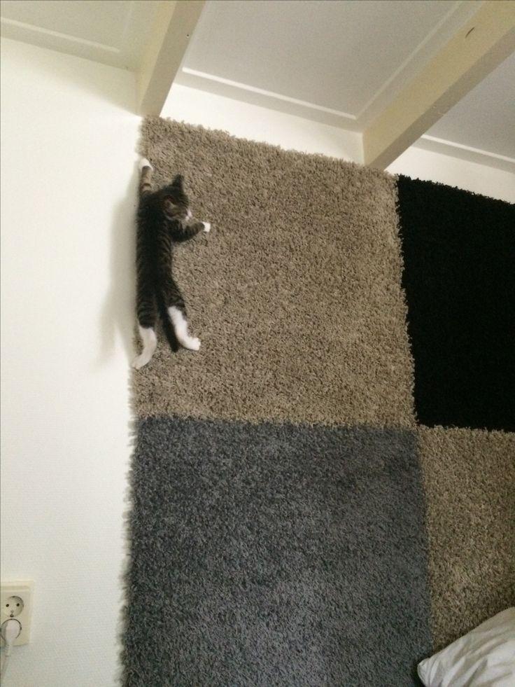 Kitten climbing the wall