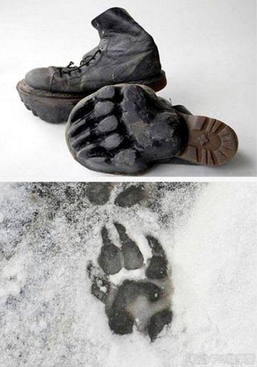 クマの足跡靴 : 私立ギコ猫学園