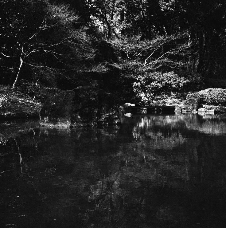 https://flic.kr/p/So4E2Y | Voigtländer Superb (1933),  Skopar 75mm F/3.5 with Y filter,  Kodak TRI-X 400, Location: Musashi-Kyuryo National Government Park, Saitama, Japan, April 2, 2017 | Musashi-Kyuryo National Government Park www.shinrinkoen.jp/en/