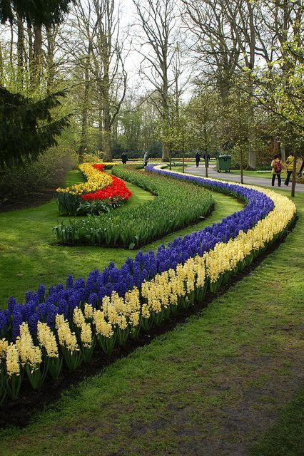 Hyacinth curves, Keukenhof Gardens, The Netherlands. Photo: KarlGercens.com, via Flickr