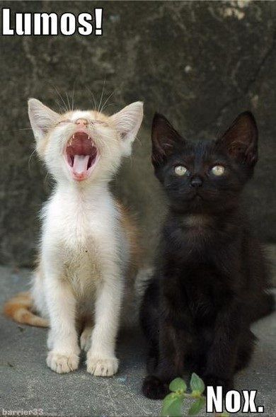 The next time I get two kittens their names will be...