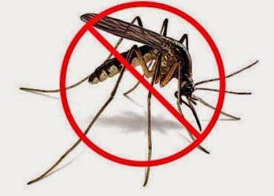 Παγίδα για κουνούπια: Απλά, εύκολα, οικολογικά