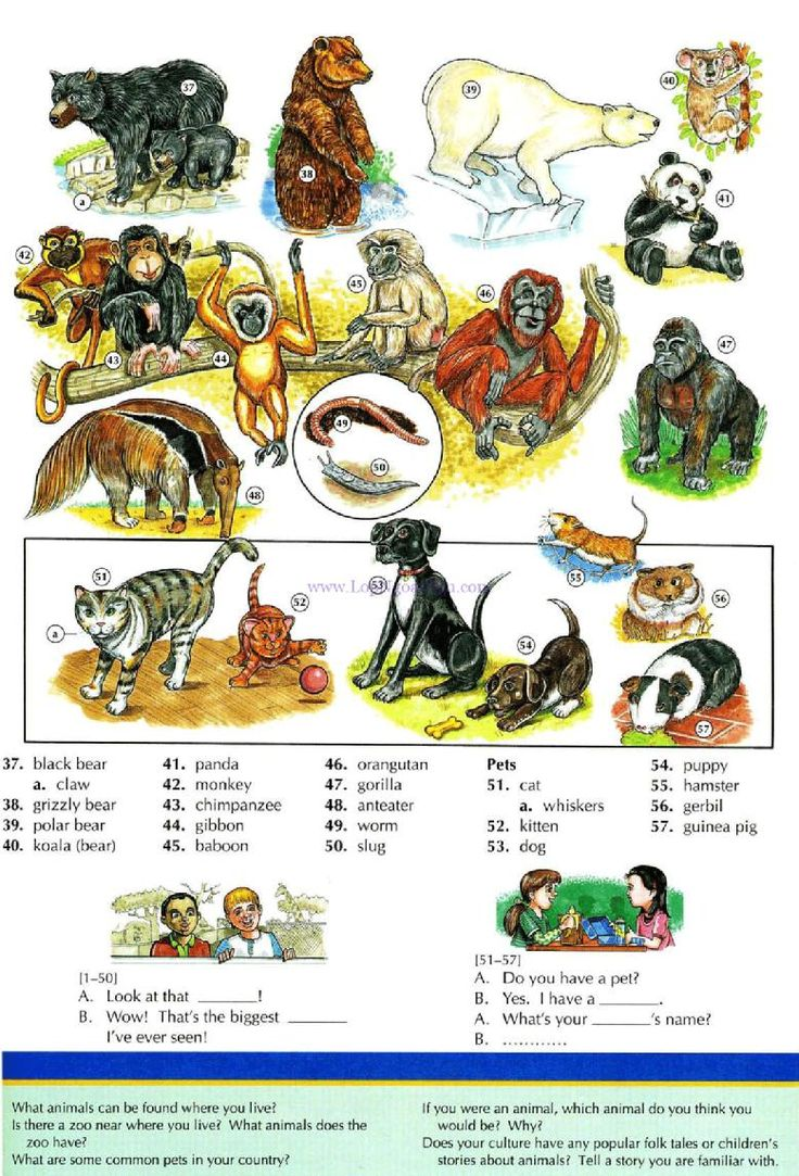 113 - ANIMALS AND PETS B - Pictures dictionary - English Study, explanations, free exercises, speaking, listening, grammar lessons, reading, writing, vocabulary, dictionary and teaching materials