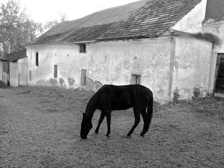 Horse and house by Roman Rogner on 500px
