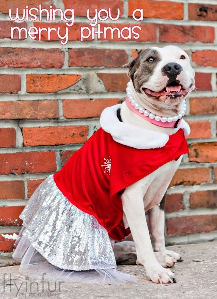 The Lazy Pit Bull: We Wish You A Merry Christmas! - http://www.thelazypitbull.com/2012/12/we-wish-you-merry-christmas.html