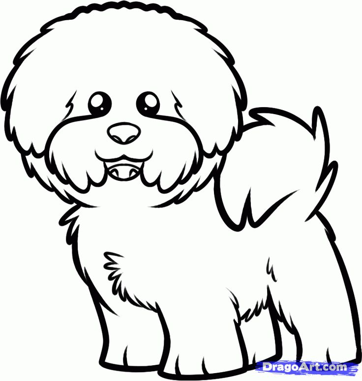 How to Draw a Bichon Frise, Step by Step, Pets, Animals