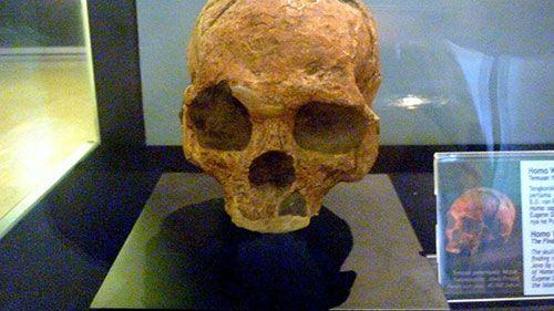 Indonesia adalah tempat ditemukannya manusia purba tertua yaitu Pithecanthropus Erectus yang diperkirakan berasal dari 1,8 juta tahun yang lalu.