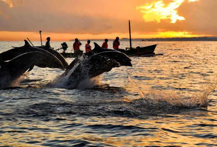 If you're curious to see dolphins directly in its Habitat, you should visit these places!! Read more...  #vacation #destination #holiday #travel #traveling #indonesia #dolphins #beach