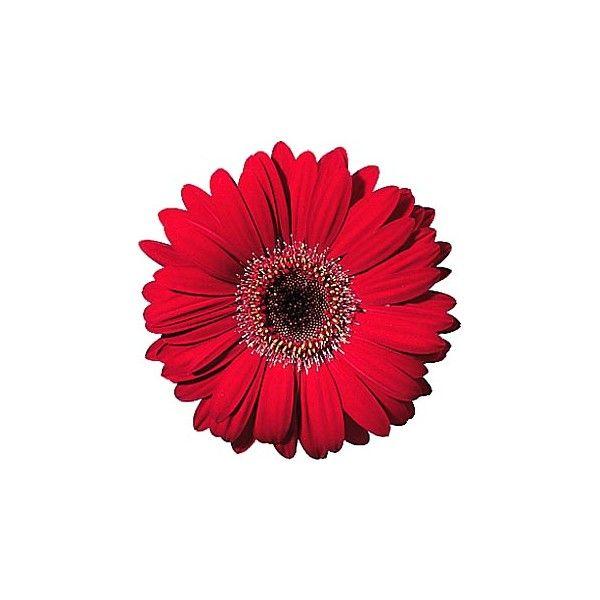 Die Besten 25 Virtual Flowers Ideen Auf Pinterest