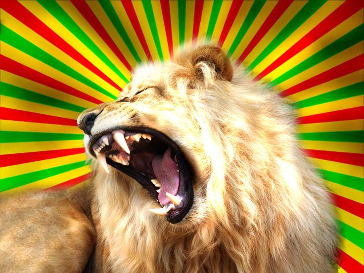 Best 25+ Rasta Lion Ideas On Pinterest