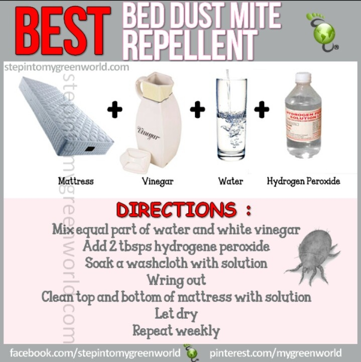 Bed dust mite repellant Cleaning Pinterest