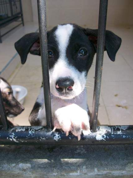 Finding homes for puppies.