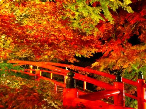 伊香保温泉の湯元付近にある「河鹿橋」は、毎年秋になると紅葉が楽しめる名所となっています。紅葉の時期に併せてライトアップを行いますので、日中と夜とで雰囲気が大きく変わる紅葉をお楽しみ下さい。