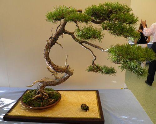 1616 best images about 12 bonsai on pinterest bonsai for Bonsai de jardin