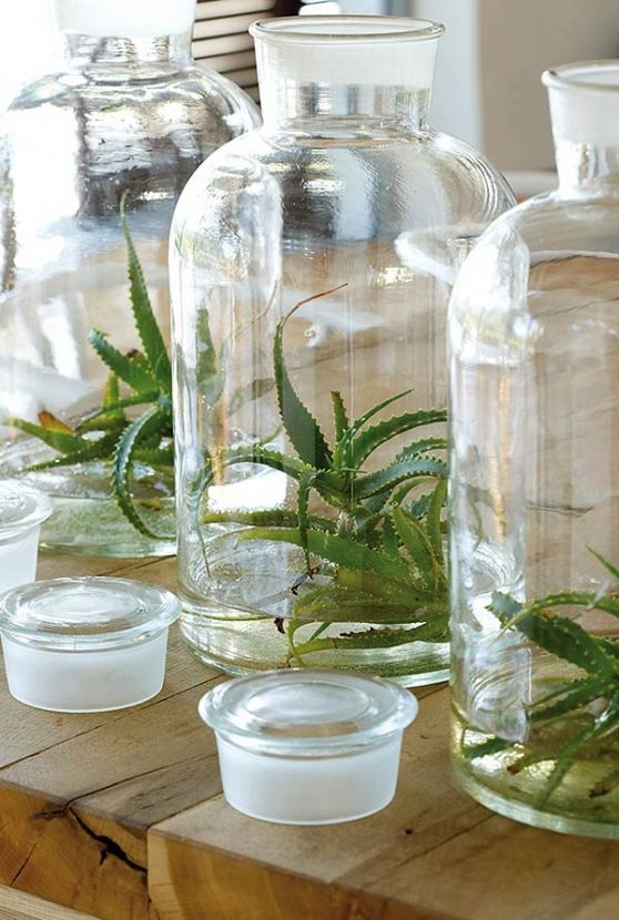VISI South Africa Franschoek - arranged aloes in large glass bottles