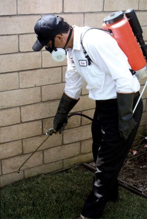 Call @ 9999787571. Get commercial and domestic pest control services with Mourier pest control. The services are available all over Delhi/NCR.