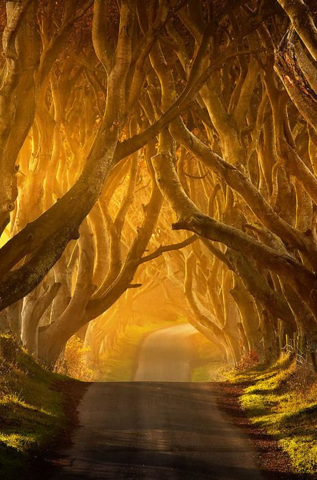 The Dark Hedges, Antrim, Ireland. Looks like sleepy hollow, or the woods from Oz, or some other fairy tale land. Awesome.