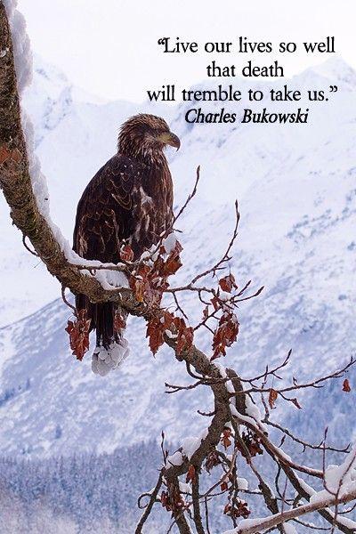 Poet Charles Bukowski On image of golden eagle in Alaska taken by Dr. Joseph T. McGinn